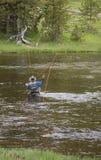 Taille profondément en rivière de Gibbon photo libre de droits