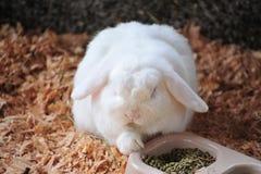 taillez le lapin photos libres de droits