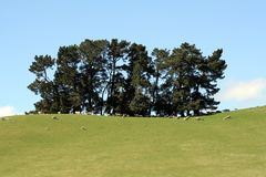 Taillis des arbres images libres de droits