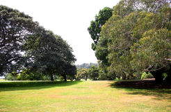 Taillis des arbres dans le domaine vert Photographie stock