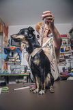 Tailor measures a dog. Older blonde lady tailor taking measures for puppy's clothing in her workshop Royalty Free Stock Images
