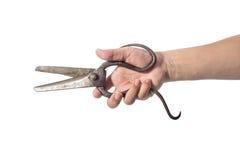 Tailor scissors Stock Image
