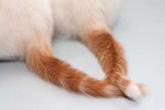 Tails entwined Stock Image