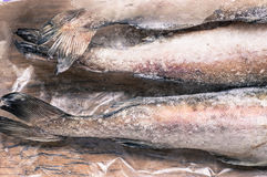 Tails frozen fish pollock. Top view royalty free stock images