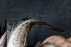 Tails of raw fish on dark background. Selective focus. Raw fish tails tied with rope with bow on dark background. Selective focus Royalty Free Stock Images