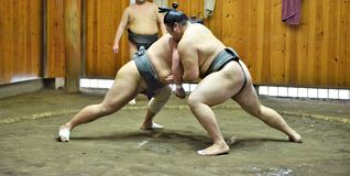 Tain бойцов борца Sumo в конюшнях sumo подготавливая для турнира sumo держало в токио Японии стоковая фотография rf