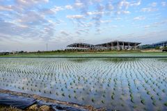Tainan Liujia Linfengying, Taiwan - January 26, 2018: Linfengying farm in winter and surrounded with paddy field, taxodium distich. Um tree and blue sky Royalty Free Stock Photo