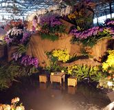 The International Orchid Show in Taiwan Royalty Free Stock Photography