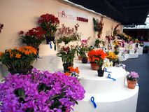 The International Orchid Show in Taiwan Stock Photos