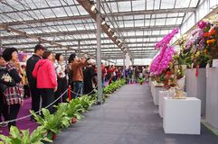 The International Orchid Show in Taiwan. TAINAN, TAIWAN - MARCH 14: Visitors enjoy the flower exhibits of the 2013 Taiwan International Orchid Show on March 14 Royalty Free Stock Image