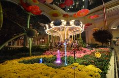 Taipei, flor, planta, flora, floristry fotografia de stock royalty free