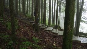 TAIPEI, TAIWÁN - 15 DE MAYO DE 2019: Los turistas visitan el área escénica de Alishan que caminan a través de bosque adentro con  almacen de video