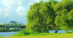 Taipei, Taiwán, parque del terraplén, cielo azul y nubes blancas, hierba verde, árboles de ocsilación, actividades al aire libre almacen de metraje de vídeo