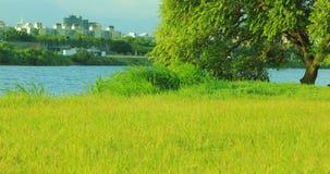 Taipei, Taiwán, parque del terraplén, cielo azul y nubes blancas, hierba verde, árboles de ocsilación, actividades al aire libre metrajes