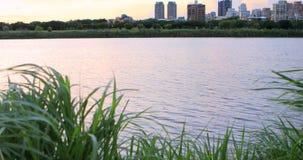 Taipei, Taiwán, parque del terraplén, puesta del sol en la puesta del sol, hierba de lámina de ocsilación, Choi Sunshine reflejó  almacen de metraje de vídeo