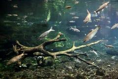Taipei Taiwan undersea world. Royalty Free Stock Photography