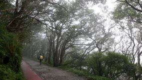 Taipei, Taiwan, Yangmingshan, Erzping Ping forest trails, wet fog, climbers hiking, forest trails,. Taipei, Taiwan Yangmingshan, Erziping Ping forest trails stock video