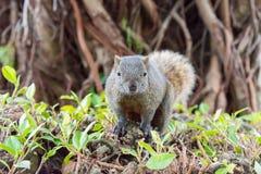 TAIPEI TAJWAN, Jan 27 2016, -: Tajwańskie wiewiórki w 228 pokoju notatce Fotografia Royalty Free