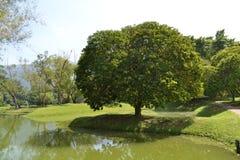 Taiping jeziora park (Taman Tasik Taiping) Obraz Stock