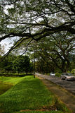Taiping lake gardens green park Stock Image