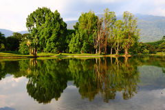 Taiping Lake Reflection. Taiping Lake Garden, one of the famous tourism spots in Malaysia royalty free stock photos