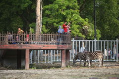 Taiping Zoo. Taiping, Malaysia - 23 March 2015: Tourist enjoy an animal show in Taiping Zoo. Taiping Zoo is the first animal park in the country Stock Images