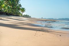 Man walking with dog on beautiful day. Taipu de Fora, Brazil - December 8, 2016: Man walking with dog on beautiful day at the beach royalty free stock image
