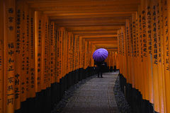 Taisha de Fushimi Inari Image stock