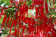 Taishan tree red lines. In china Royalty Free Stock Image