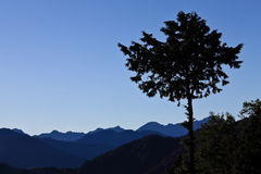 Taiwan - Alishan Stock Photography