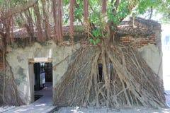 Taiwan: Casa na árvore de Anping Fotografia de Stock