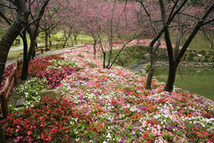Taiwan Flower garden royalty free stock image