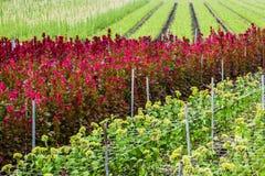 Taiwan flower nursery Royalty Free Stock Photos