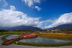 Taiwan flower valley in spring season Royalty Free Stock Photography