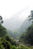 Taiwan forest with fog Royalty Free Stock Photography