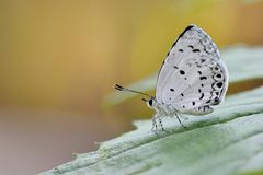 Taiwan Glass small gray butterfly Royalty Free Stock Photography