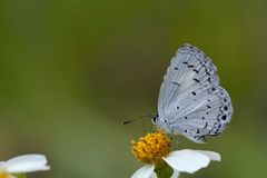 Taiwan Glass small gray butterfly Stock Images