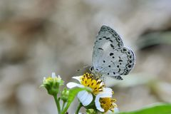 Taiwan Glass small gray butterfly Stock Photography