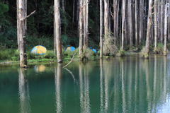 Taiwan knarkare Forest Damming Lake Royaltyfri Bild