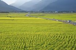 Taiwan lantligt landskap royaltyfria bilder