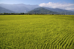 Taiwan lantligt landskap royaltyfri foto