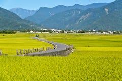 Taiwan lantligt landskap fotografering för bildbyråer