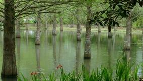 On the Taiwan Line 9 Hualien County Feiyu Pine Park stock video