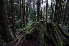 Taiwan National Park. Trees from Taiwan National Park Royalty Free Stock Photos