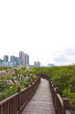 Taiwan nature preserve Stock Image