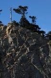 Taiwan pine tree Royalty Free Stock Photos
