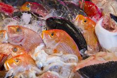 Seafood restaurants, fresh seafood, a variety of fish shellfish, Taiwan`s seafood shop,. Taiwan`s famous seafood restaurant, fresh seafood on the freezer, a Royalty Free Stock Photos