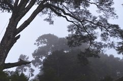 Taiwanese cedar forests in a misty day in QiLai mountains, northern Taiwan
