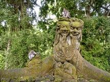 Taiwanese macaque of Taiwanese cyclopis van resusaapmacaca naast de steenapen Verdeeld in Taiwan stock afbeeldingen