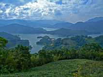 Taiwanese Tea Plantation Royalty Free Stock Photography